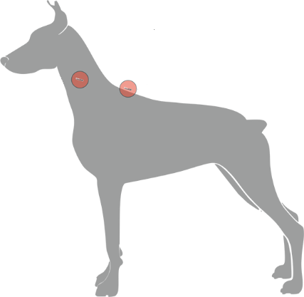 Microchip implntation locations on a dog - WORLDPETNET