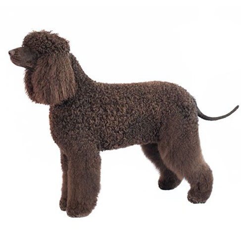 Hypoallergenic dog worldpetnet